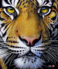 Orange_tiger-face